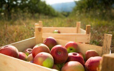 ¿Son ecológicos los alimentos ecológicos?
