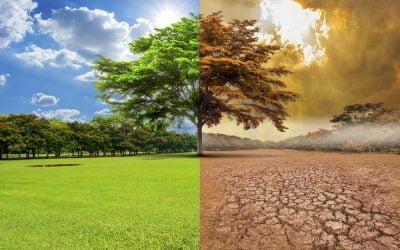 ¿Se hace suficiente para enfrentar el cambio Climático?