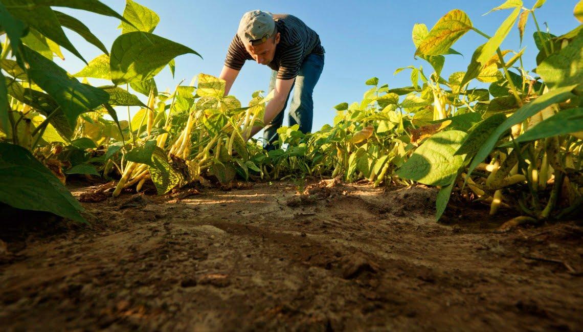 El secuestro del CO2 una práctica ecológica en la agricultura
